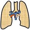 3. Respirační systém